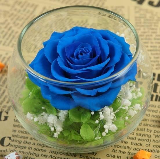 lọ hoa hồng ecuador xanh dương