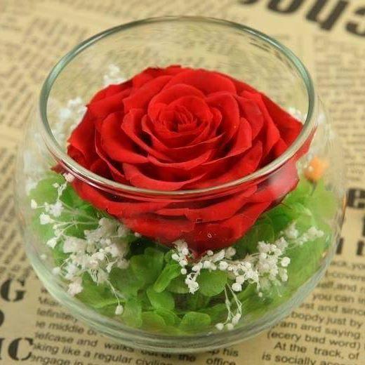 lọ hoa hồng ecuador đỏ
