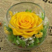 lọ hoa hồng ecuador vàng