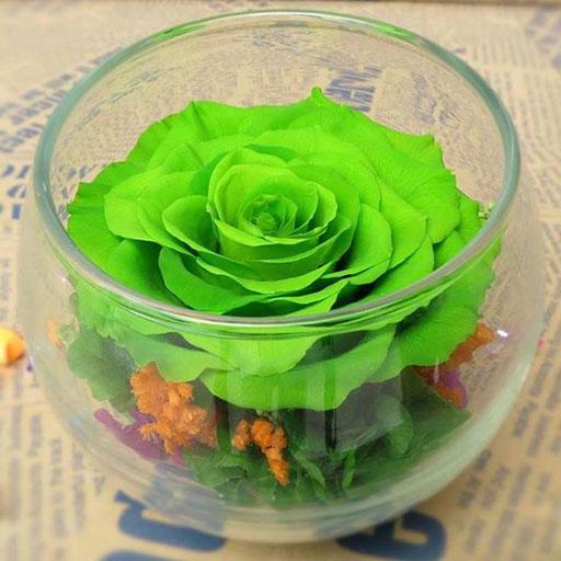 lọ hoa hồng ecuador xanh lá