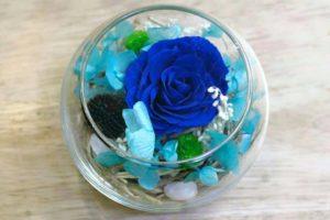 hoa hồng xanh bất tử