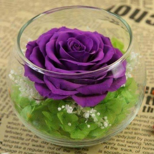 lọ hoa hồng ecuador tím
